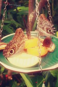 Vlinders in Emmen
