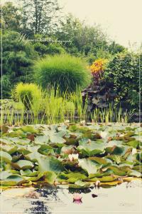 Wegner-Design-tuin-Dijkstra2